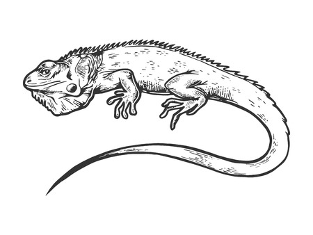 Iguana animal engraving vector illustration. Scratch board style imitation. Black and white hand drawn image. Stockfoto - 116679315