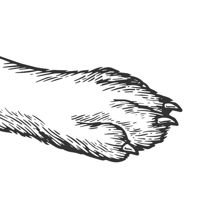 Dog paw engraving vector illustration. Scratch board style imitation. Black and white hand drawn image.