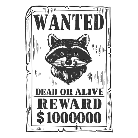 Raccoon criminal reward poster engraving vector illustration. Scratch board style imitation. Black and white hand drawn image.