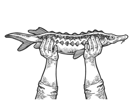 Hands with sturgeon fish engraving vector illustration. Scratch board style imitation. Black and white hand drawn image.