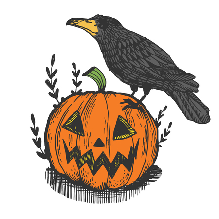 Crow bird and halloween pumpkin color engraving vector illustration. Scratch board style imitation. Hand drawn image.