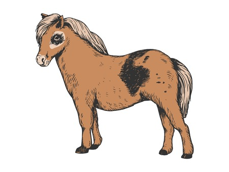 Pony small horse color engraving vector illustration. Scratch board style imitation. Black and white hand drawn image.