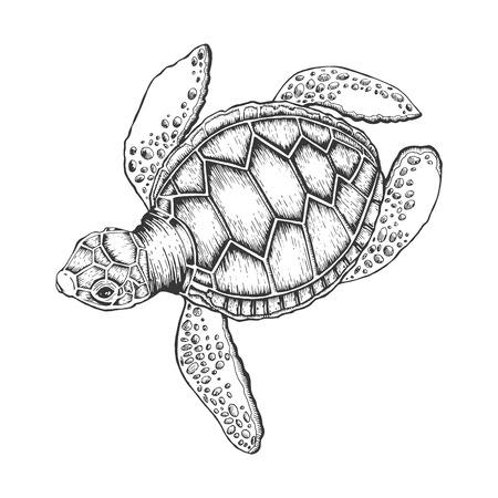 Illustration vectorielle de tortue. Imitation de style planche à gratter. Image dessinée à la main.