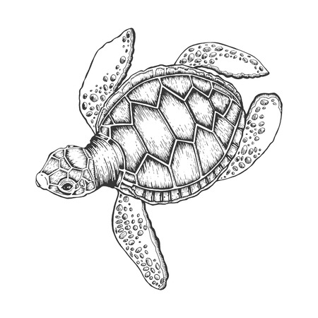 Turtle vector illustration. Scratch board style imitation. Hand drawn image. 向量圖像