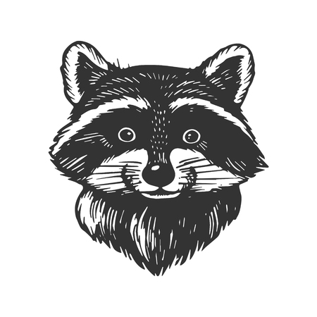 Ilustración de vector de grabado de cabeza de mapache. Imitación de tablero de rascar. Imagen dibujada a mano en blanco y negro.