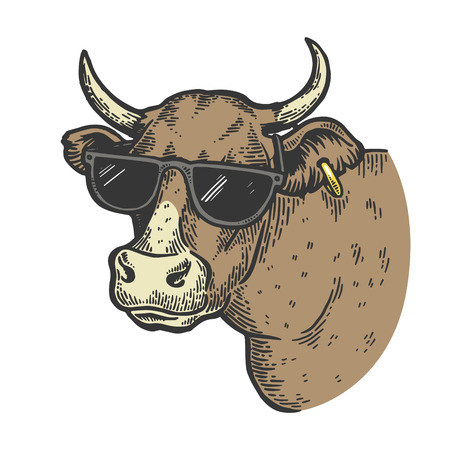 Cow animal in sunglasses color sketch engraving vector illustration. Scratch board style imitation. Black and white hand drawn image.