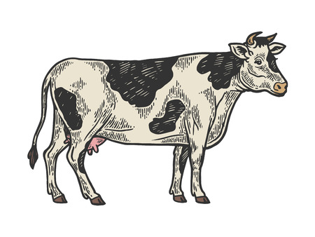 Cow rural farm animal color sketch engraving vector illustration. Scratch board style imitation. Black and white hand drawn image.