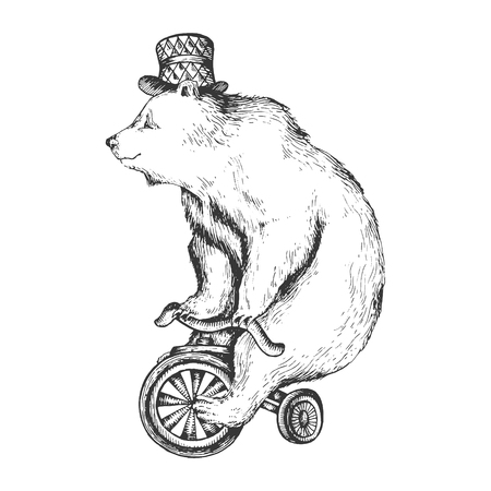 Circus bear on bicycle sketch engraving vector illustration. Scratch board style imitation. Hand drawn image. Vectores