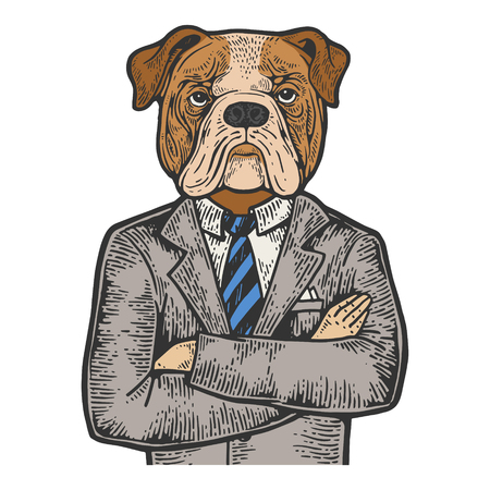 Bulldog head businessman color sketch engraving vector illustration. Scratch board style imitation. Black and white hand drawn image.
