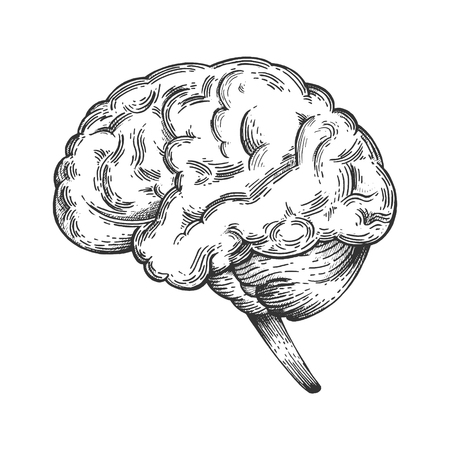 Human brain schematic vintage sketch engraving vector illustration. Scratch board style imitation. Black and white hand drawn image. Illustration