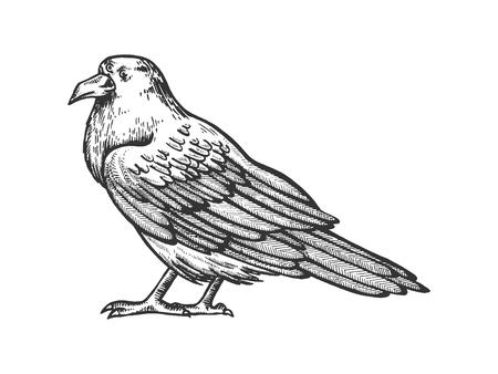 Crow with three eyes sketch engraving vector illustration. Scratch board style imitation. Hand drawn image. Illusztráció