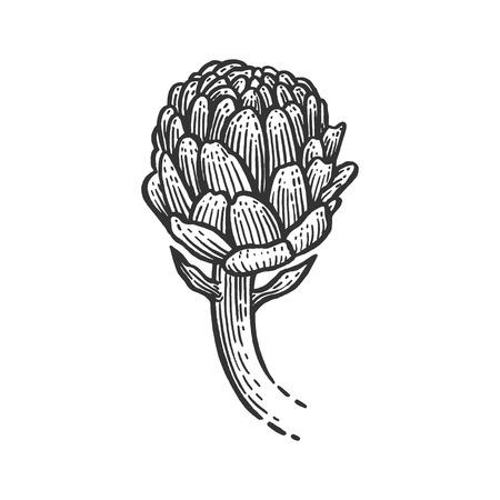 Artichoke plant sketch engraving vector illustration. Scratch board style imitation. Black and white hand drawn image. Banco de Imagens - 124033446