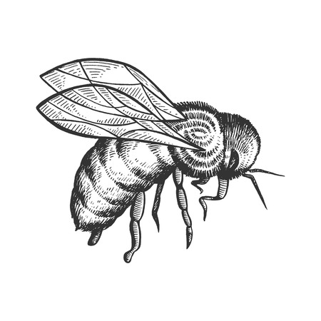 Honey bee insect animal sketch engraving vector illustration. Scratch board style imitation. Black and white hand drawn image.