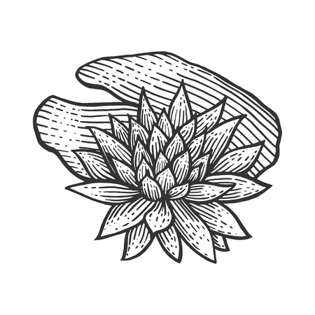 Nymphaea water lily flower vintage sketch engraving vector illustration. Scratch board style imitation. Black and white hand drawn image.
