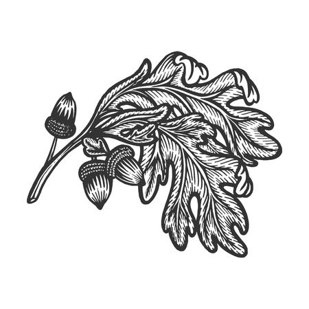 Rama de encina con bellotas boceto grabado ilustración vectorial. Imitación de tablero de rascar. Imagen dibujada a mano.