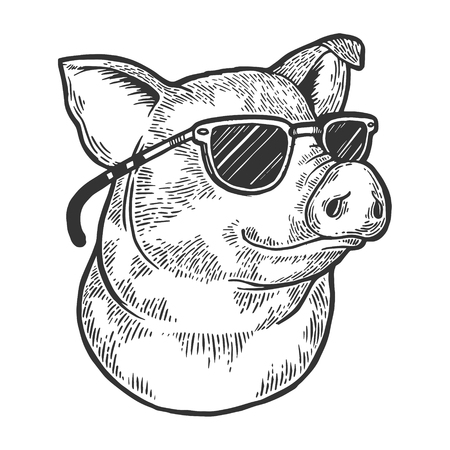 Animale di maiale in occhiali da sole schizzo incisione illustrazione vettoriale. Imitazione di stile scratch board. Immagine disegnata a mano in bianco e nero.