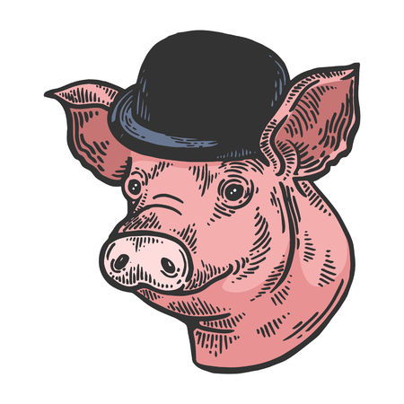 Pig animal in bowler hat sketch color engraving vector illustration. Scratch board style imitation. Black and white hand drawn image.