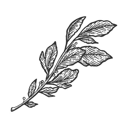 Laurel branch sketch engraving vector illustration. Scratch board style imitation. Hand drawn image.