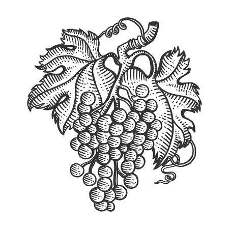Bunch of grapes with leaves sketch engraving vector illustration. Scratch board style imitation. Hand drawn image.