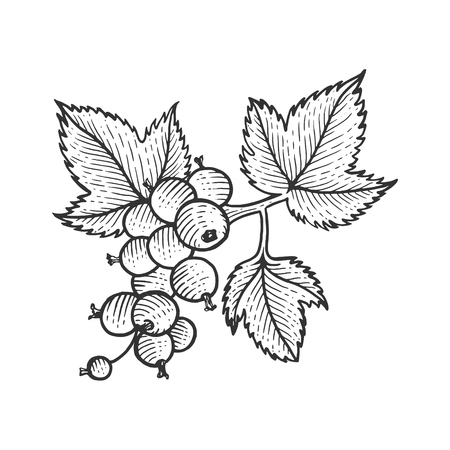 Black currant with leaves sketch engraving vector illustration. Scratch board style imitation. Hand drawn image.