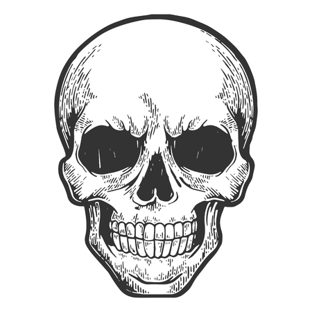 Human skull sketch engraving vector illustration. Scratch board style imitation. Hand drawn image.