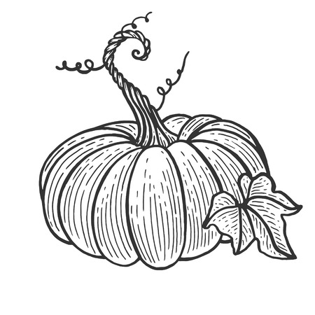 Pumpkin fruit sketch engraving vector illustration. Scratch board style imitation. Black and white hand drawn image.