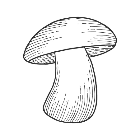 Porcini white edible sketch mushroom engraving vector illustration. Scratch board style imitation. Black and white hand drawn image. Ilustrace