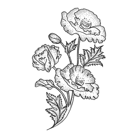 Poppy flower plant sketch engraving vector illustration. Scratch board style imitation. Black and white hand drawn image.