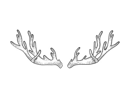 Deer horns sketch engraving vector illustration. Scratch board style imitation. Black and white hand drawn image.