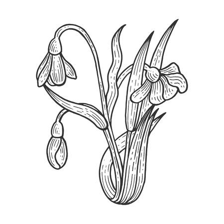 Snowdrop Galanthus fiore pianta incisione schizzo illustrazione vettoriale. Imitazione di stile scratch board. Immagine disegnata a mano in bianco e nero.