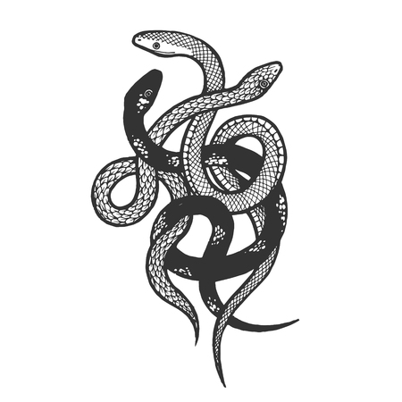Binded snakes sketch engraving vector illustration. Scratch board style imitation. Hand drawn image. Stockfoto - 119839392