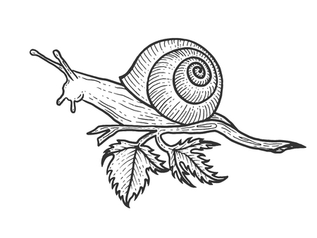 Snail animal sketch engraving vector illustration. Scratch board style imitation. Black and white hand drawn image. Ilustração