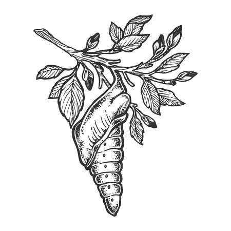 Butterfly cocoon pupa sketch engraving vector illustration. Scratch board style imitation. Hand drawn image. Vettoriali