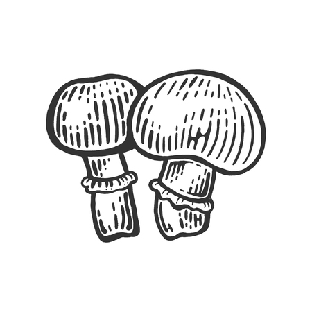 Porcini Agaricus champignon edible mushroom sketch engraving vector illustration. Scratch board style imitation. Black and white hand drawn image.