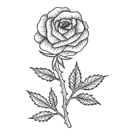 Dibujo de flor color de rosa grabado ilustración vectorial. Imitación de tablero de rascar. Imagen dibujada a mano en blanco y negro. Ilustración de vector