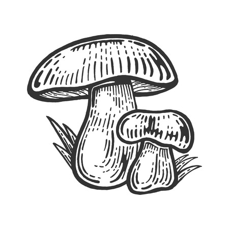 Porcini white edible sketch mushroom engraving vector illustration. Scratch board style imitation. Black and white hand drawn image. Illustration