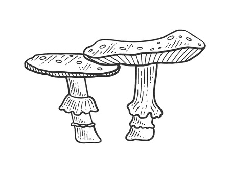 Amanita mushroom plant engraving sketch vector illustration. Scratch board style imitation. Black and white hand drawn image. Illustration