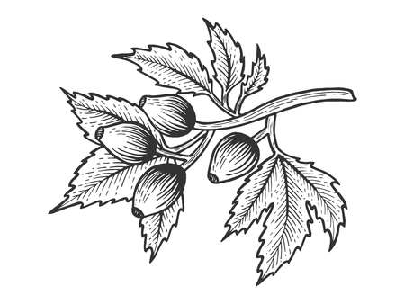 Dog rose with leaves sketch engraving vector illustration. Scratch board style imitation. Hand drawn image.