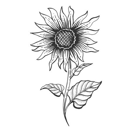 Sunflower plant sketch engraving vector illustration. Scratch board style imitation. Hand drawn image.
