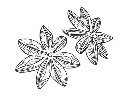 Illustrazione vettoriale di incisione di schizzo di spezie illicium di anice anice. Imitazione di stile scratch board. Immagine disegnata a mano. Vettoriali