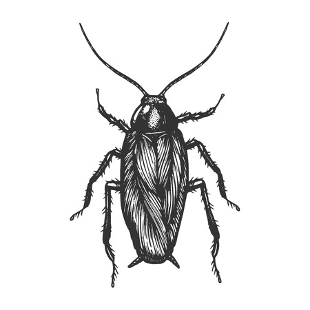Cockroach bug insect sketch engraving vector illustration. Scratch board style imitation. Black and white hand drawn image.