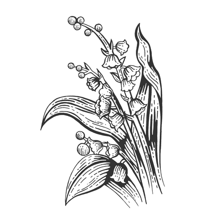 Lily of the valley convallaria flower sketch engraving vector illustration. Scratch board style imitation. Black and white hand drawn image.