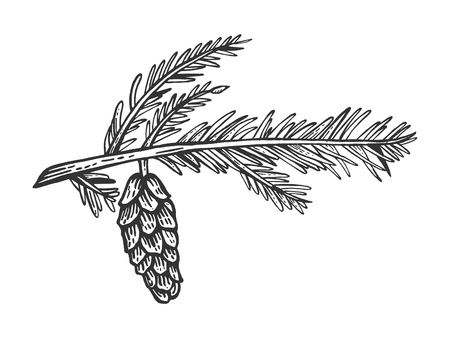 Branch of pine with cone engraving vector illustration. Scratch board style imitation. Hand drawn image. Stock Illustratie