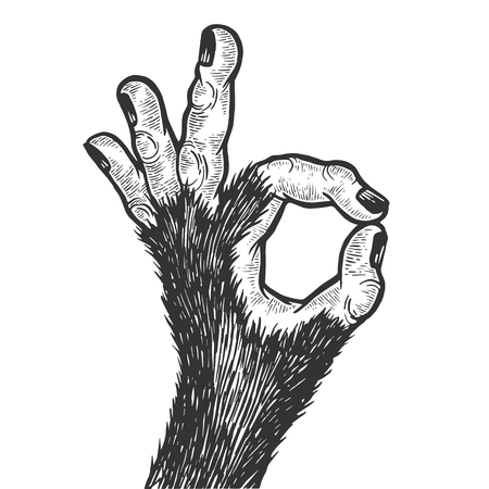 Monkey animal hand with ok gesture sketch engraving vector illustration. Good sign. Scratch board style imitation. Hand drawn image. Banque d'images - 124033561