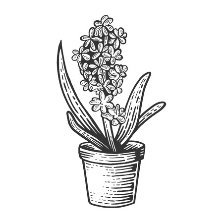 Hyacinth flower sketch engraving vector illustration. Scratch board style imitation. Black and white hand drawn image.