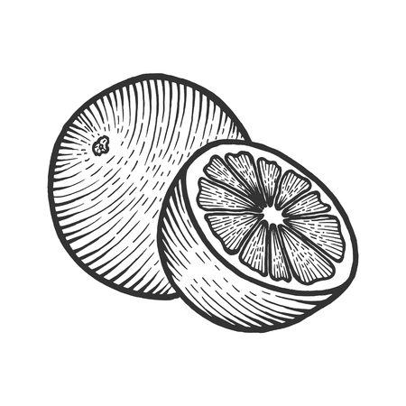 Orange citrus exotic fruit sketch engraving vector illustration. Scratch board style imitation. Black and white hand drawn image.