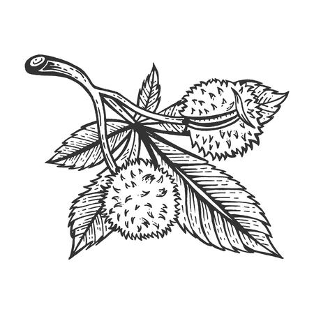 Bosquejo de la rama de castaño grabado ilustración vectorial. Imitación de tablero de rascar. Imagen dibujada a mano.