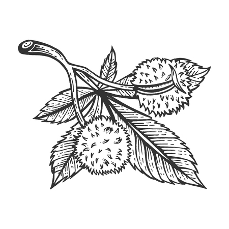 Chestnut tree branch sketch engraving vector illustration. Scratch board style imitation. Hand drawn image. Standard-Bild - 120286456