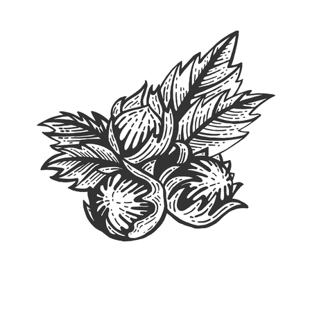 Hazelnut nut sketch engraving vector illustration. Scratch board style imitation. Black and white hand drawn image.