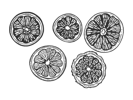 Citrus exotic fruits slice set sketch engraving vector illustration. Scratch board style imitation. Black and white hand drawn image.